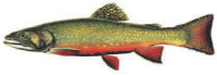 Brook Trout Donor Level: Art used with permission of Joseph Tomelleri.